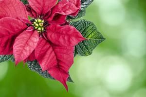 christmas-316482_1280