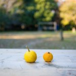 citrus-fruits-648317_640