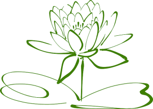 lotus-blossom-304876_640
